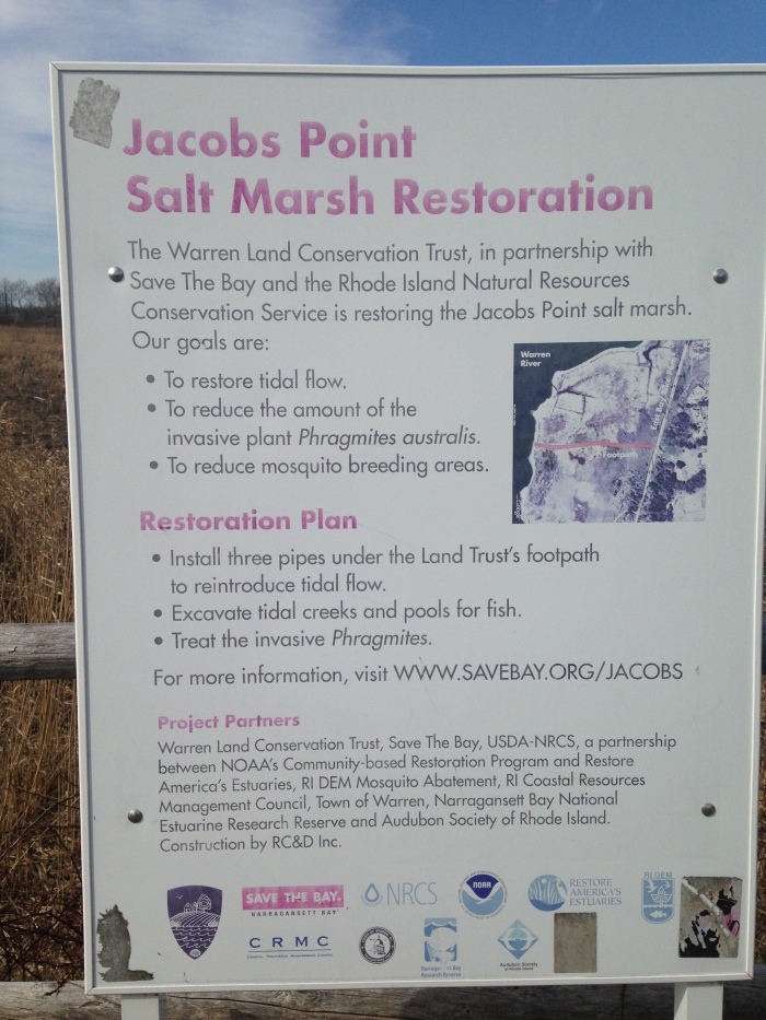 jacobs point salt marsh restoration