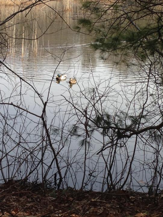 duck pond 1